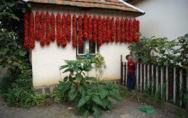 Венгерская приправа паприка
