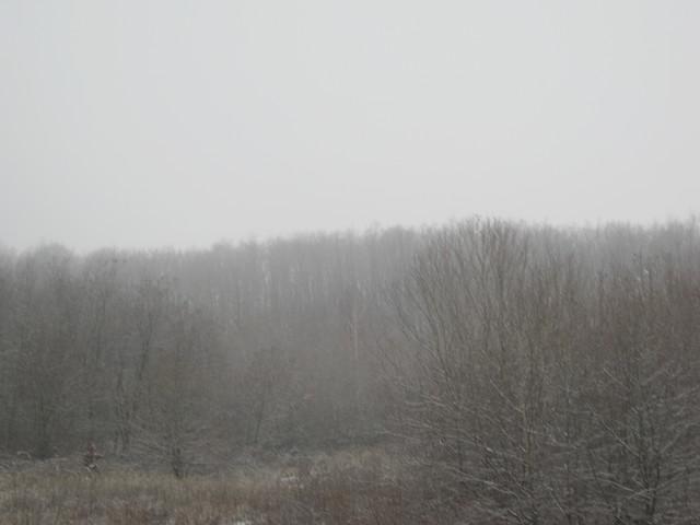 Деревья в дымке