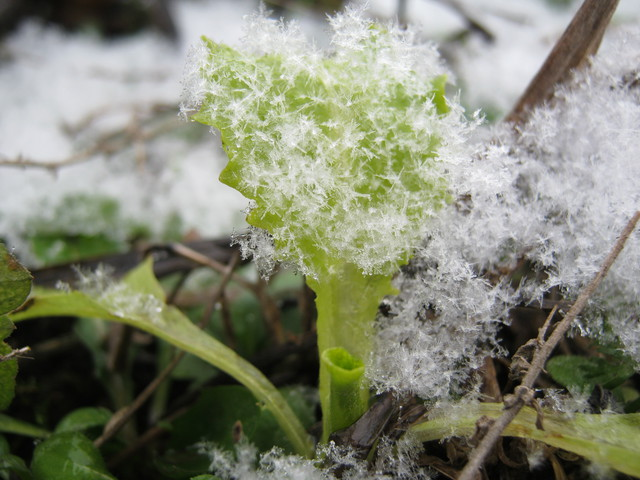Салат под снегом