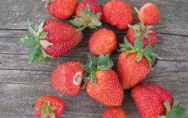 Замороженная клубника— советы перед ягодным сезоном