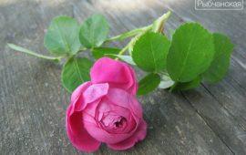 Варенье из лепестков роз в моем исполнении
