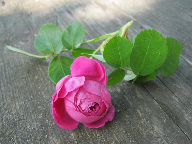 Варенье из лепестков роз и заветное желание
