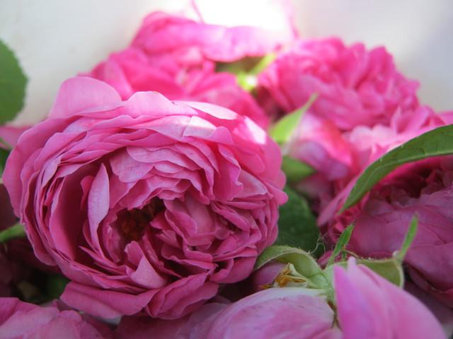 Собранные розы