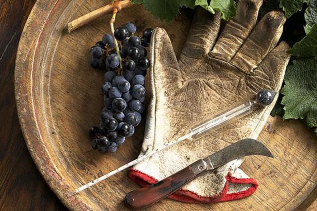 Набор виноградаря