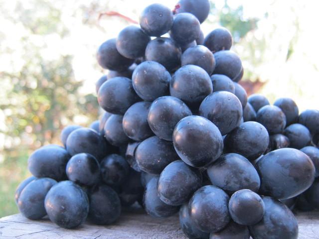 Виноград Неро - из него тоже делаюи вино в домашних условиях