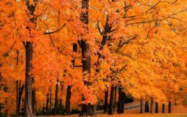 Осенние «Ароматы счастья»