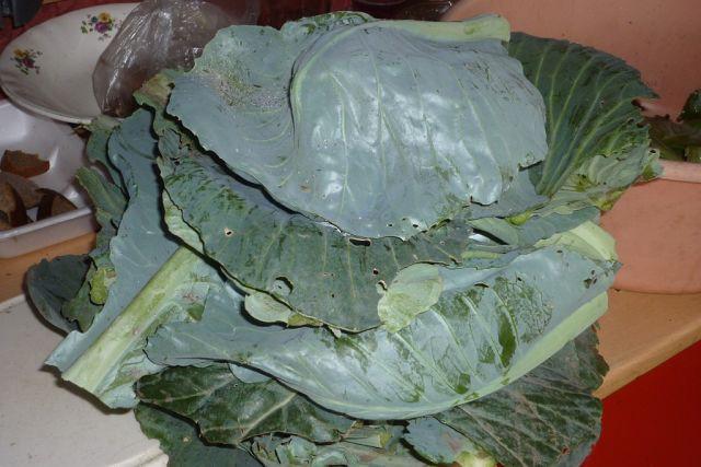 зеленые листья для приготовления крошева