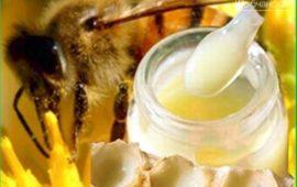 Что такое пчелиное маточное молочко и как его принимать с пользой для здоровья?