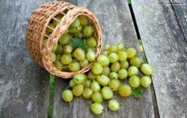 Варенье из крыжовника— рецепты от простого до классического царского