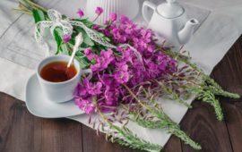 Копорский чай: как заготавливать и заваривать